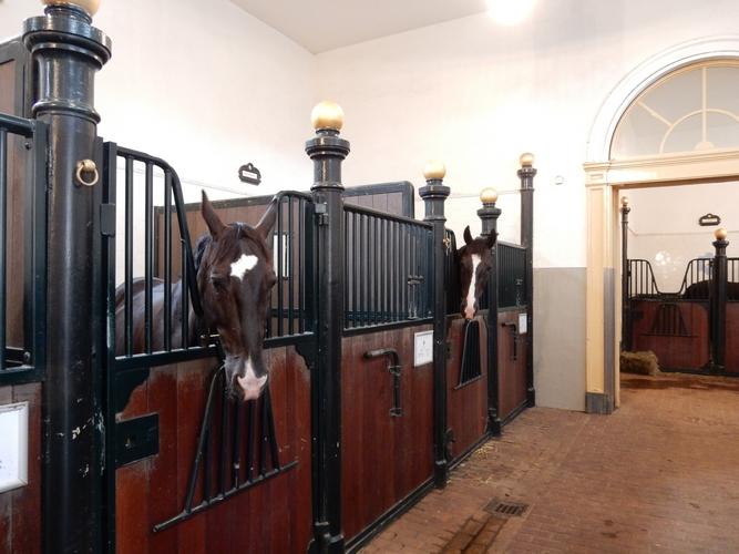 Paarden Koninklijke stallen Den Haag