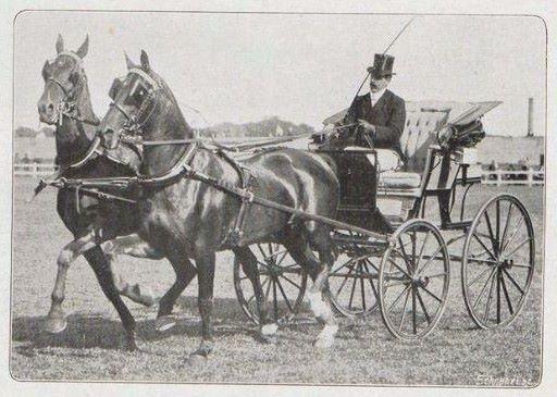 Tweespan van Willem Truffino op het concours hippique Houtrust 1915