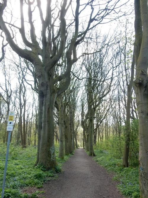 Bomenlaan Meer en Bos